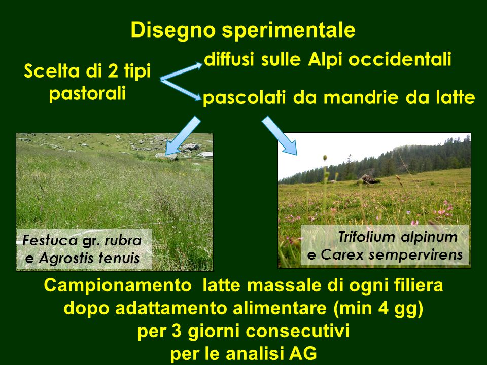 Scelta di 2 tipi pastorali Festuca gr. rubra e Agrostis tenuis