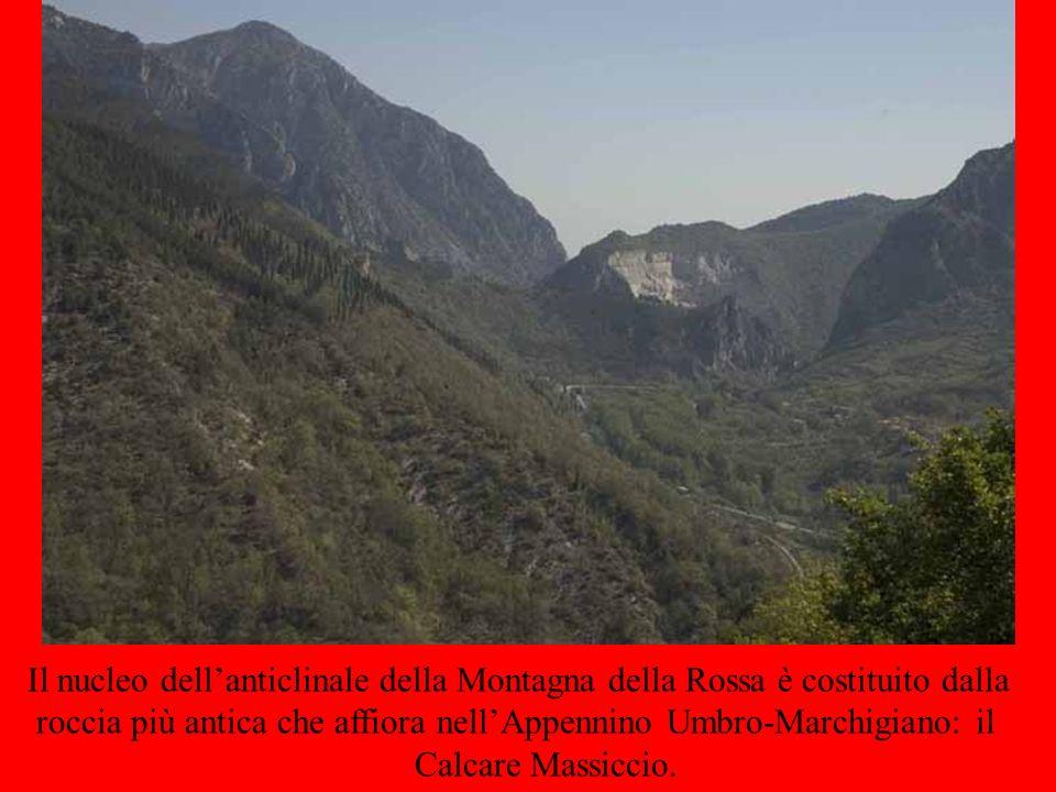 Il nucleo dell'anticlinale della Montagna della Rossa è costituito dalla