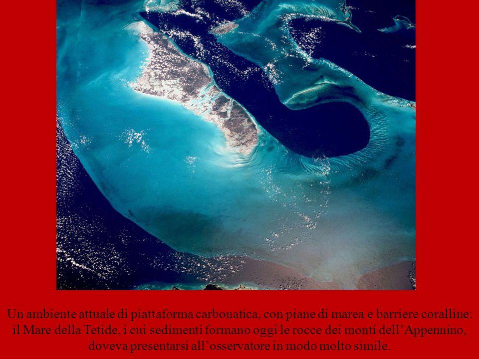 Un ambiente attuale di piattaforma carbonatica, con piane di marea e barriere coralline: il Mare della Tetide, i cui sedimenti formano oggi le rocce dei monti dell'Appennino, doveva presentarsi all'osservatore in modo molto simile.