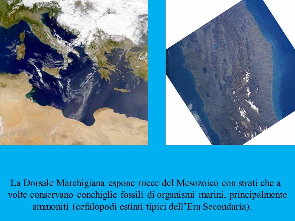 La Dorsale Marchigiana espone rocce del Mesozoico con strati che a