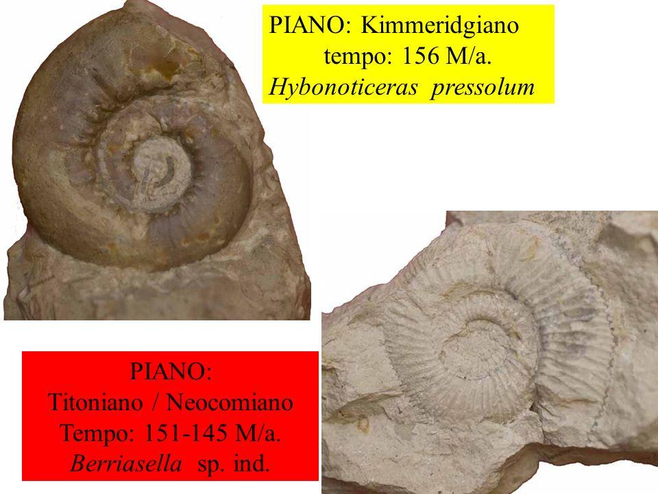 Titoniano / Neocomiano