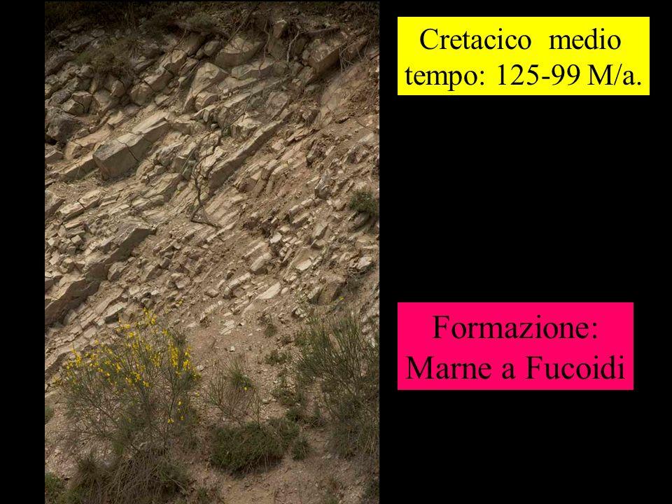 Cretacico medio tempo: 125-99 M/a. Formazione: Marne a Fucoidi