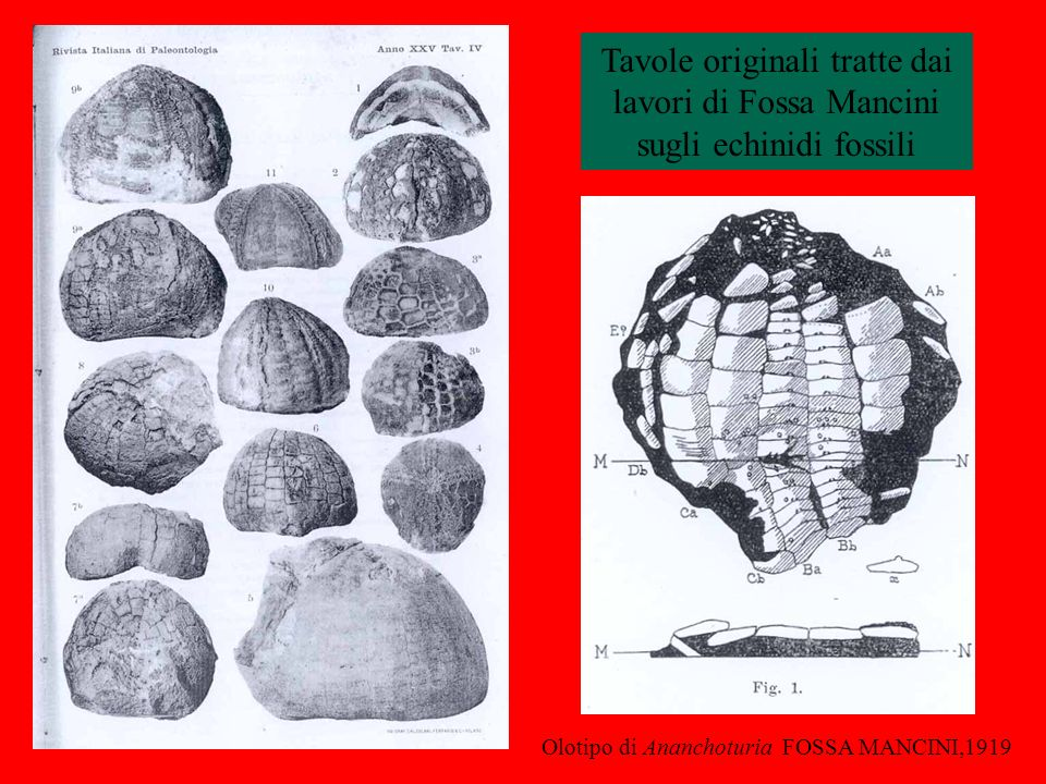 Tavole originali tratte dai lavori di Fossa Mancini
