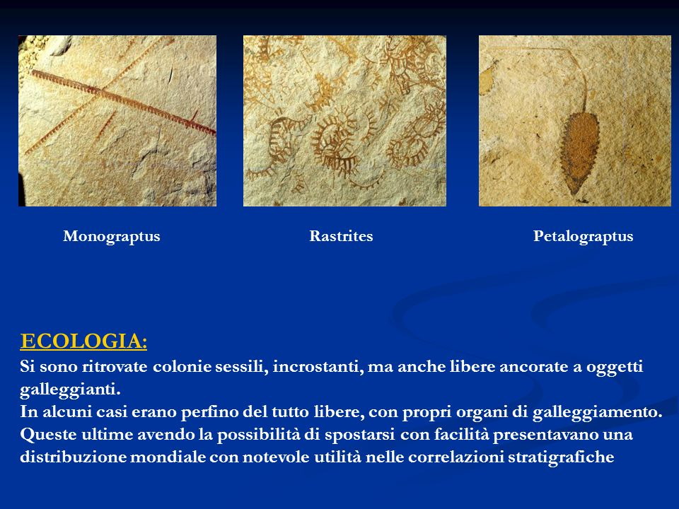 Monograptus Rastrites. Petalograptus. ECOLOGIA: Si sono ritrovate colonie sessili, incrostanti, ma anche libere ancorate a oggetti.