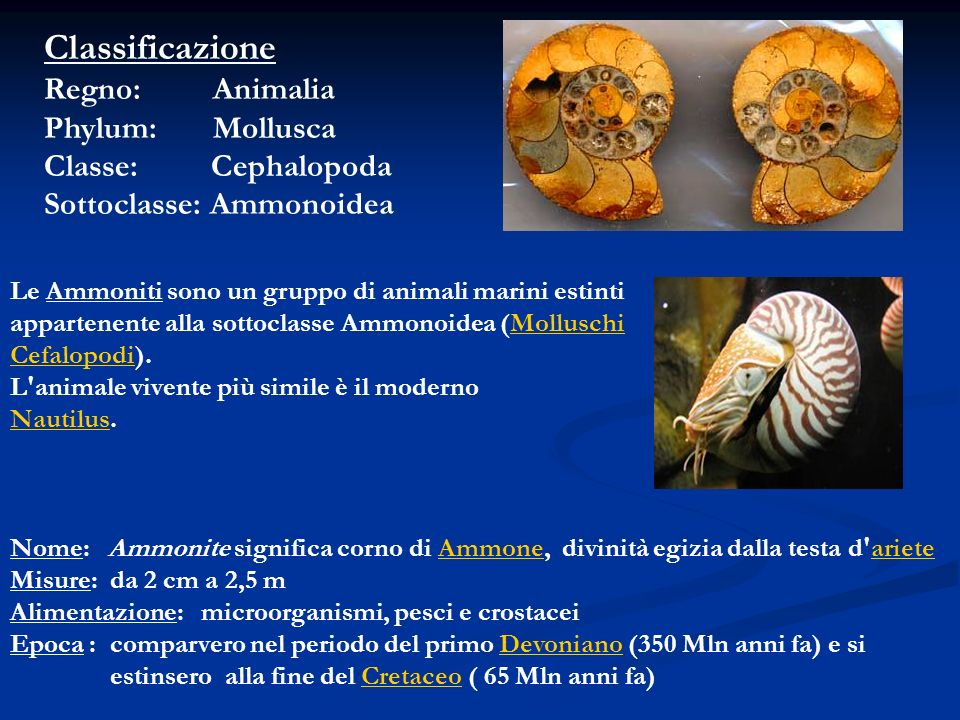 Classificazione Regno: Animalia Phylum: Mollusca Classe: Cephalopoda