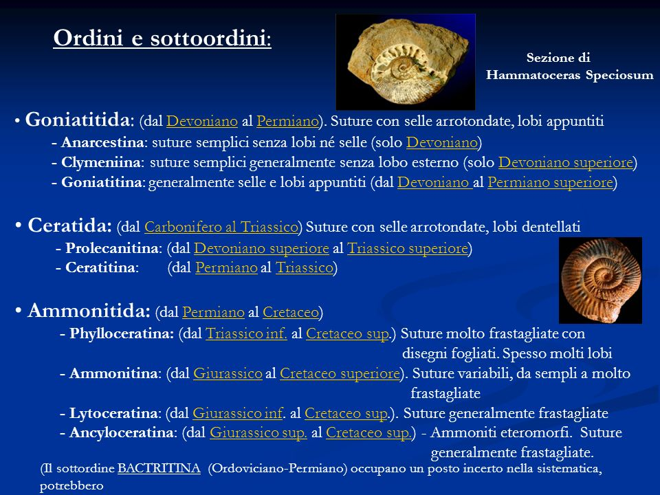 Ordini e sottoordini: Goniatitida: (dal Devoniano al Permiano). Suture con selle arrotondate, lobi appuntiti.