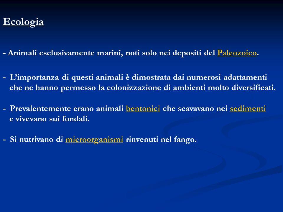 Ecologia - Animali esclusivamente marini, noti solo nei depositi del Paleozoico.