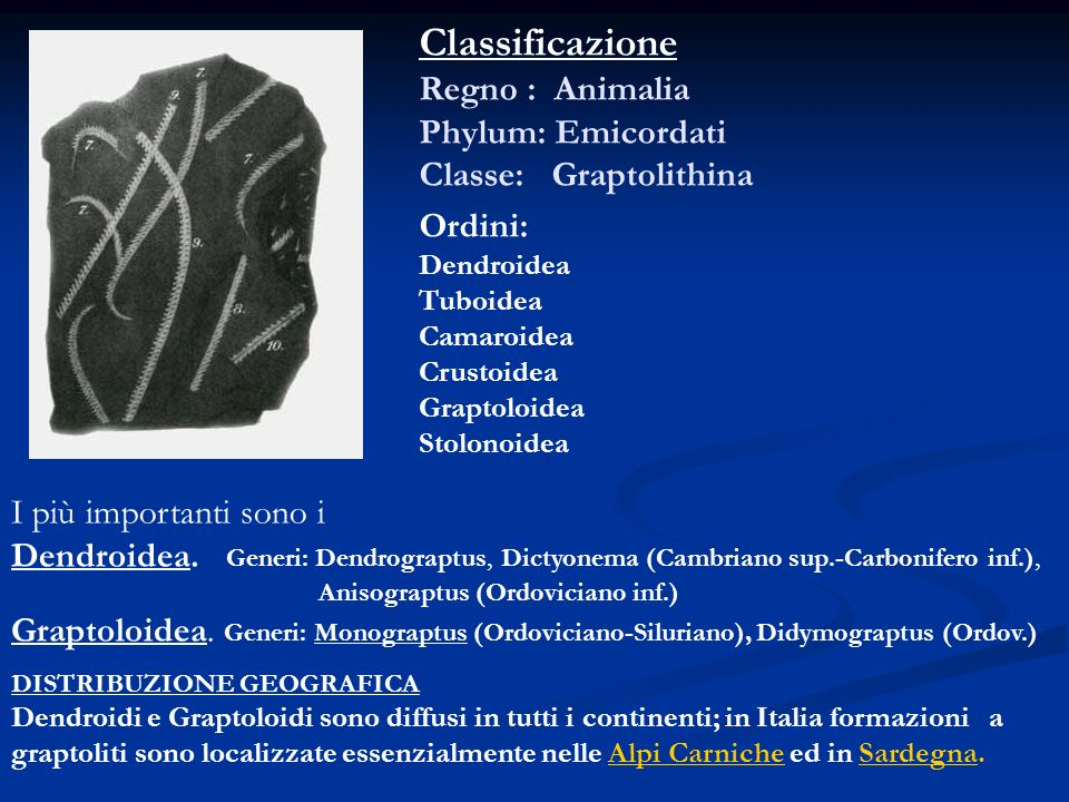 Classificazione Regno : Animalia Phylum: Emicordati Classe: Graptolithina