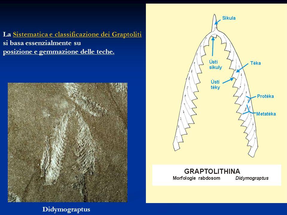 La Sistematica e classificazione dei Graptoliti