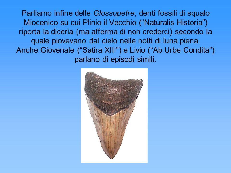 Parliamo infine delle Glossopetre, denti fossili di squalo Miocenico su cui Plinio il Vecchio ( Naturalis Historia ) riporta la diceria (ma afferma di non crederci) secondo la quale piovevano dal cielo nelle notti di luna piena.