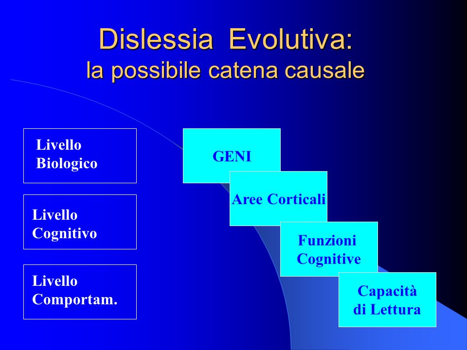 Dislessia Evolutiva: la possibile catena causale