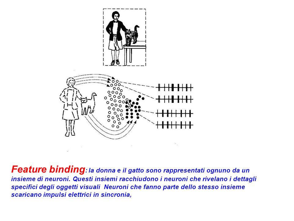 Feature binding: la donna e il gatto sono rappresentati ognuno da un insieme di neuroni.