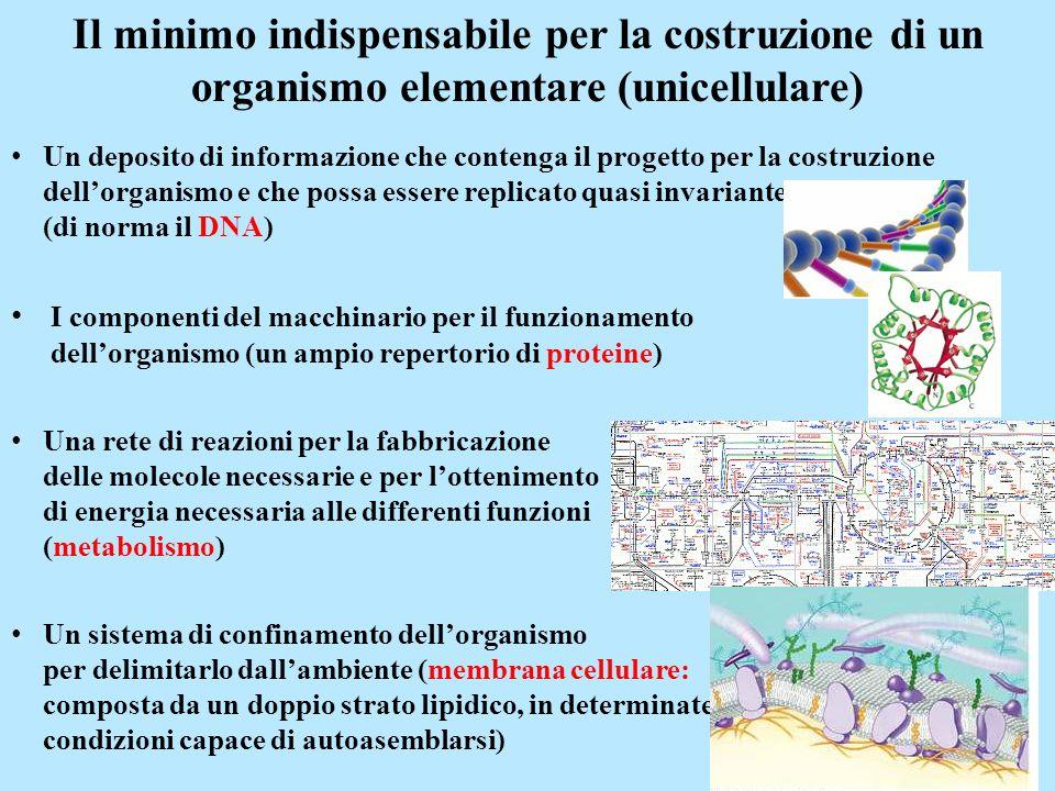 Il minimo indispensabile per la costruzione di un organismo elementare (unicellulare)