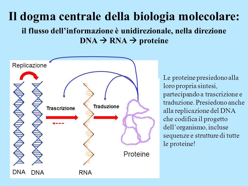 Il dogma centrale della biologia molecolare: