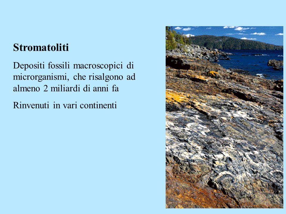 Stromatoliti Depositi fossili macroscopici di microrganismi, che risalgono ad almeno 2 miliardi di anni fa.