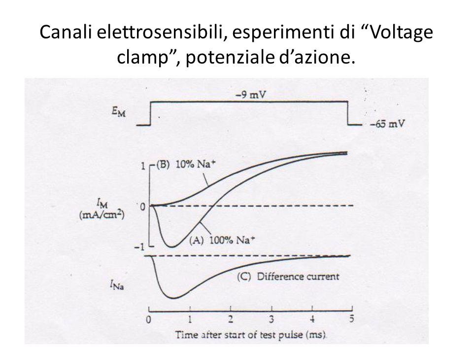 Canali elettrosensibili, esperimenti di Voltage clamp , potenziale d'azione.