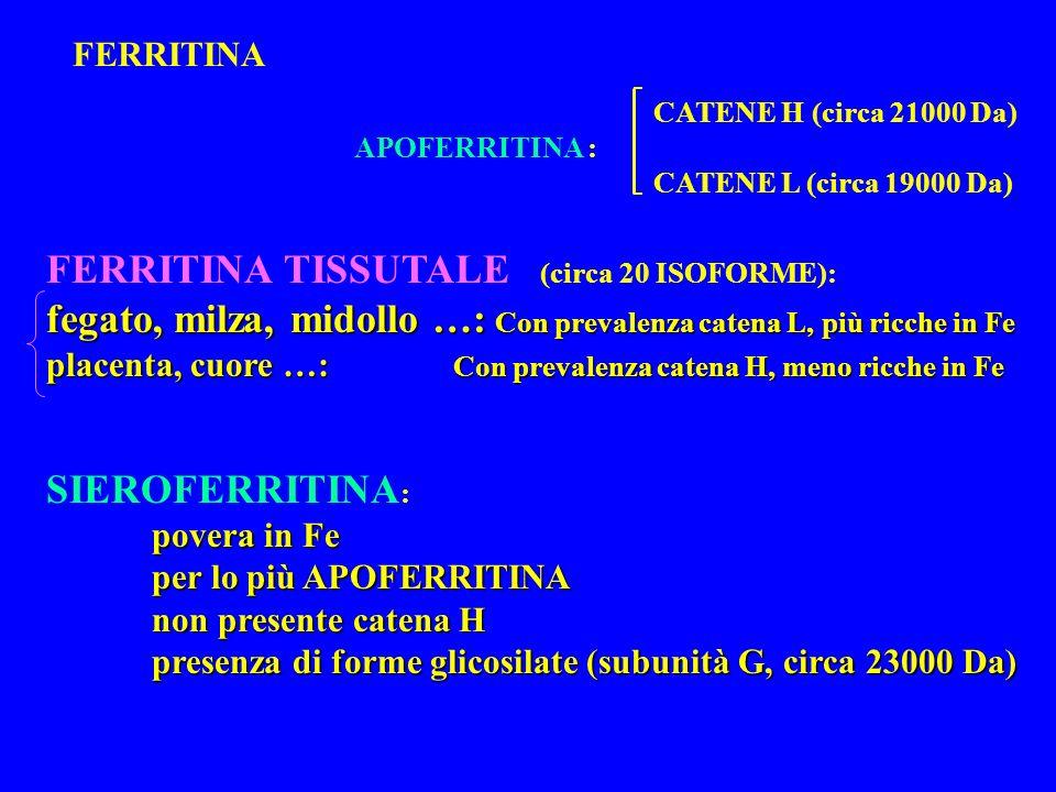 FERRITINA TISSUTALE (circa 20 ISOFORME):