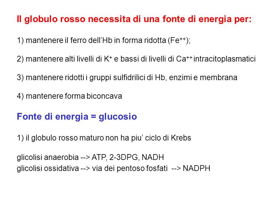 Il globulo rosso necessita di una fonte di energia per: