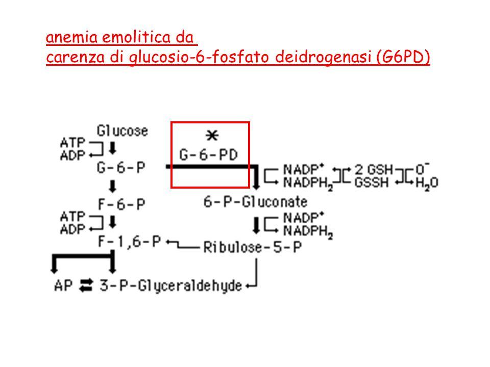 anemia emolitica da carenza di glucosio-6-fosfato deidrogenasi (G6PD)