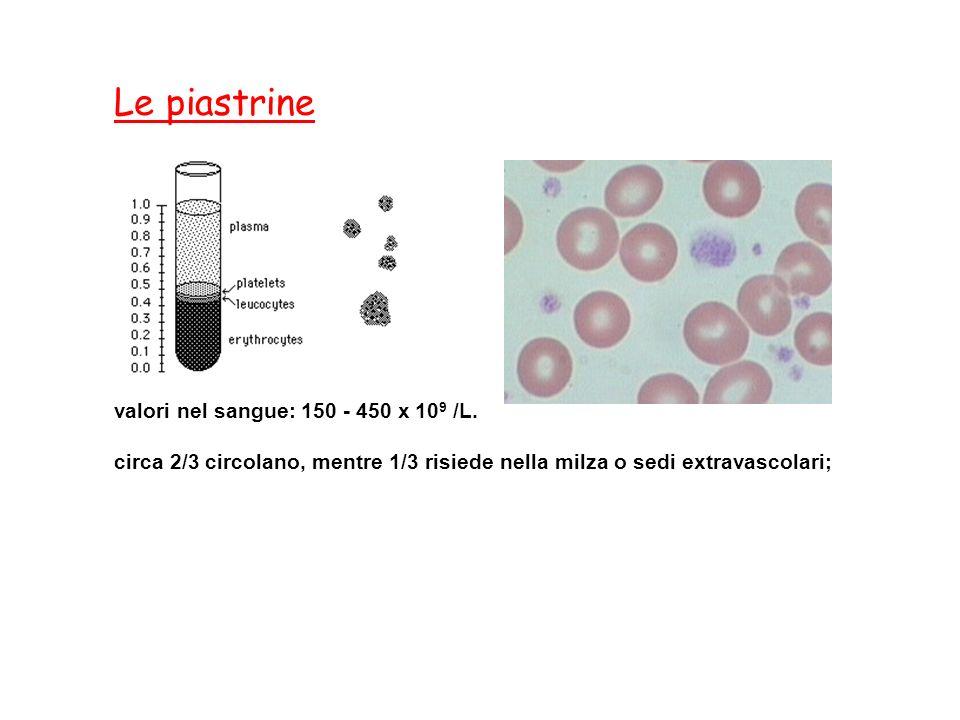 Le piastrine valori nel sangue: 150 - 450 x 109 /L.