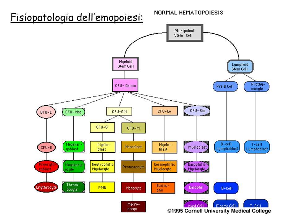 Fisiopatologia dell'emopoiesi: