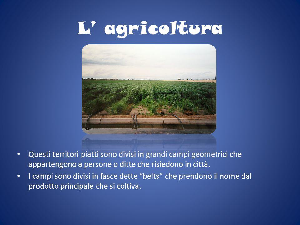 L' agricolturaQuesti territori piatti sono divisi in grandi campi geometrici che appartengono a persone o ditte che risiedono in città.