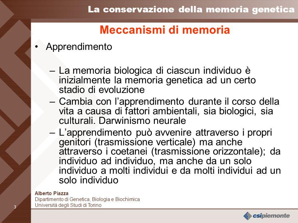 Meccanismi di memoria Apprendimento