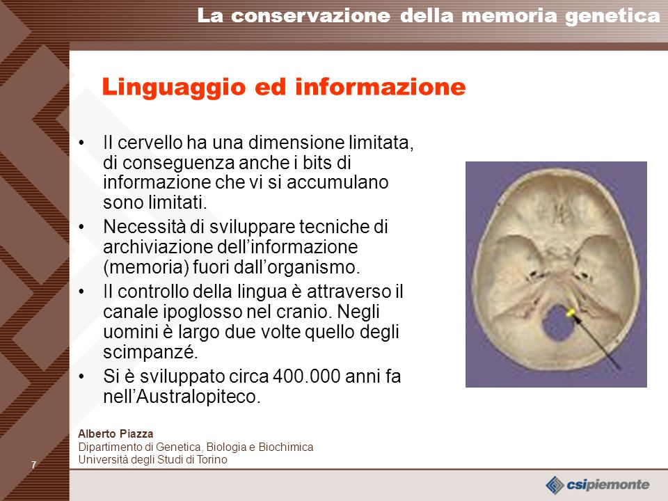 Linguaggio ed informazione