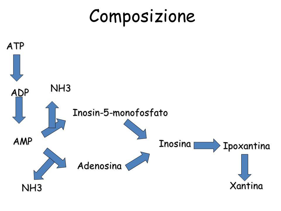 Composizione ATP NH3 ADP Inosin-5-monofosfato AMP Inosina Ipoxantina