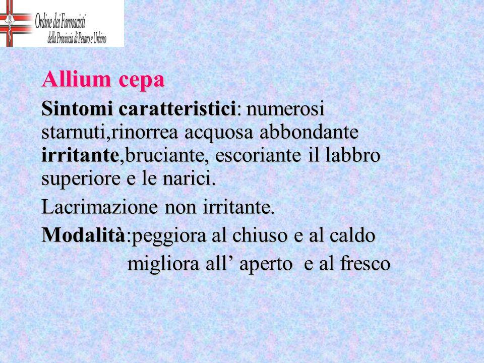 Allium cepa Sintomi caratteristici: numerosi starnuti,rinorrea acquosa abbondante irritante,bruciante, escoriante il labbro superiore e le narici.