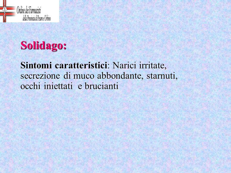 Solidago: Sintomi caratteristici: Narici irritate, secrezione di muco abbondante, starnuti, occhi iniettati e brucianti.