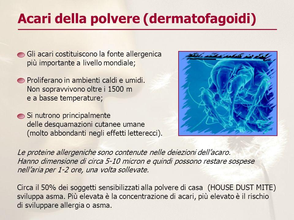 Acari della polvere (dermatofagoidi)