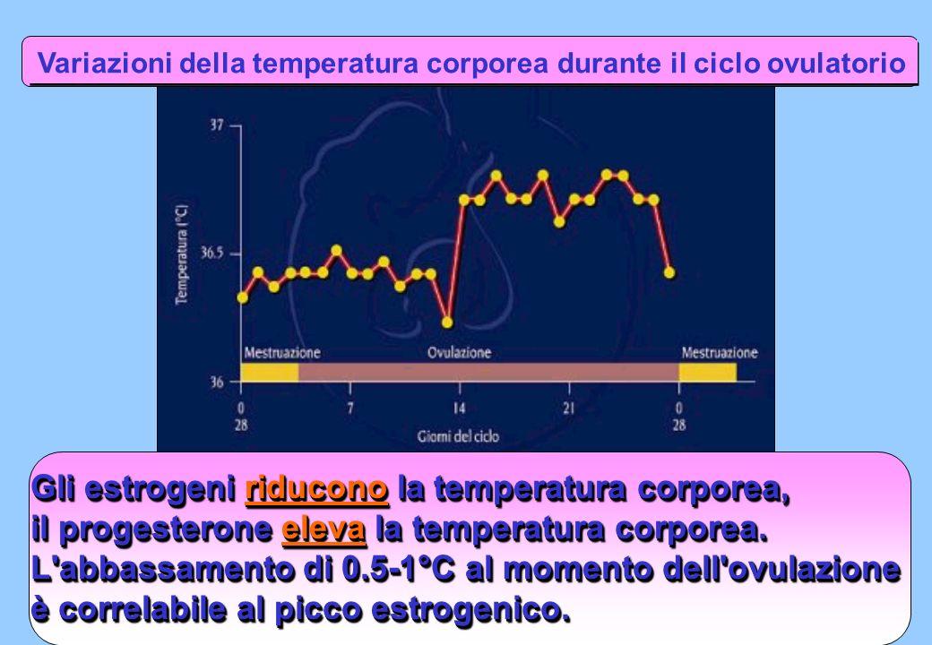 Gli estrogeni riducono la temperatura corporea,