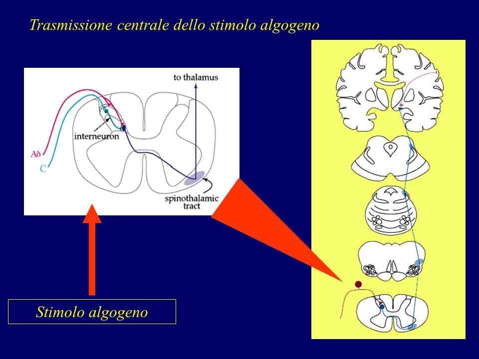 Trasmissione centrale dello stimolo algogeno