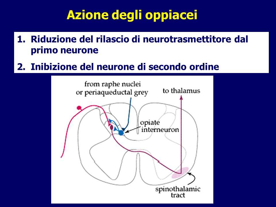 Azione degli oppiacei Riduzione del rilascio di neurotrasmettitore dal primo neurone.