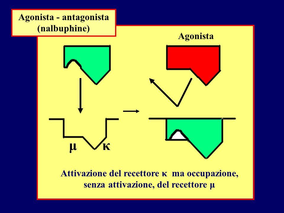 Agonista - antagonista (nalbuphine)