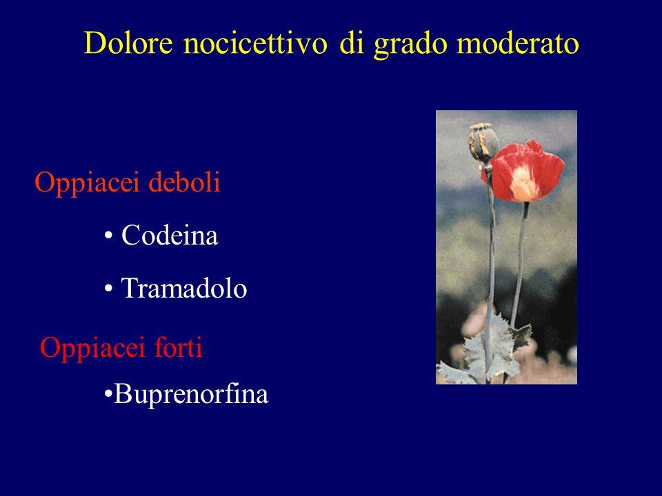 Dolore nocicettivo di grado moderato