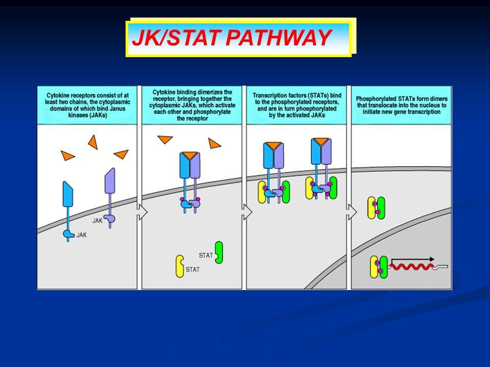 JK/STAT PATHWAY
