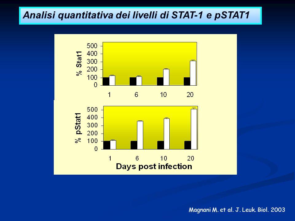 Analisi quantitativa dei livelli di STAT-1 e pSTAT1
