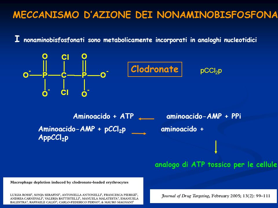 MECCANISMO D'AZIONE DEI NONAMINOBISFOSFONATI
