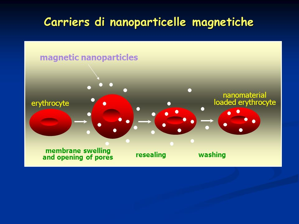 Carriers di nanoparticelle magnetiche magnetic nanoparticles