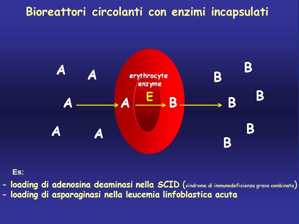 Bioreattori circolanti con enzimi incapsulati