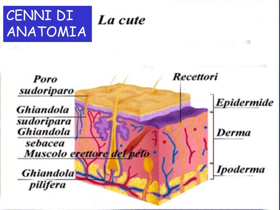 CENNI DI ANATOMIALa pelle è paragonabile ad un manto che riveste tutto il nostro corpo.