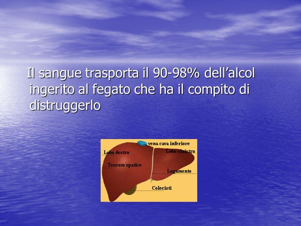 Il sangue trasporta il 90-98% dell'alcol ingerito al fegato che ha il compito di distruggerlo
