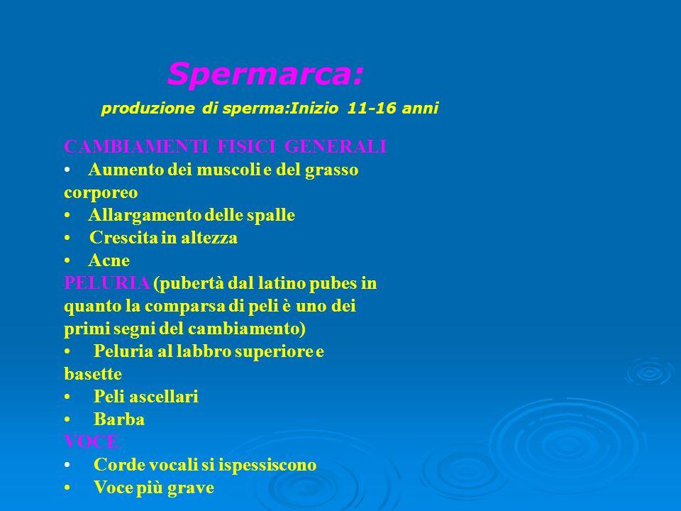 produzione di sperma:Inizio 11-16 anni