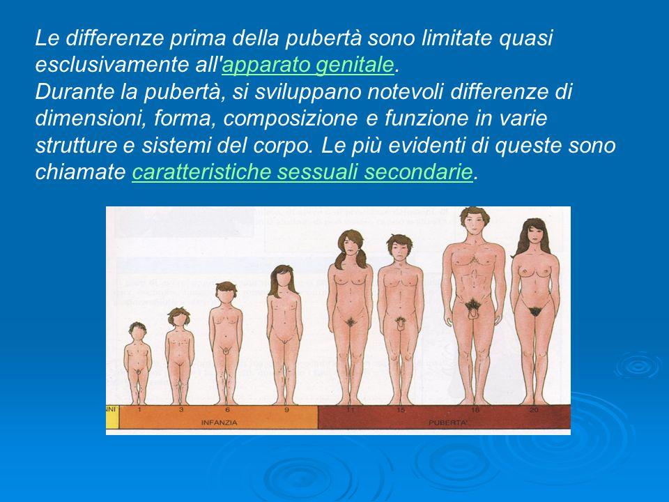 Le differenze prima della pubertà sono limitate quasi esclusivamente all apparato genitale.