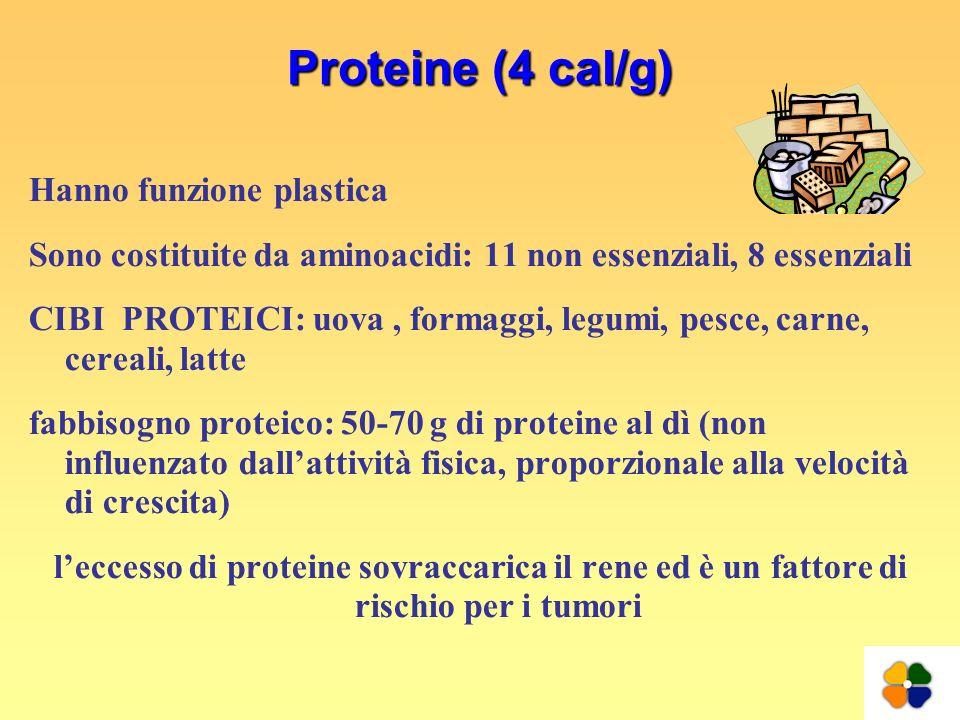 Proteine (4 cal/g) Hanno funzione plastica