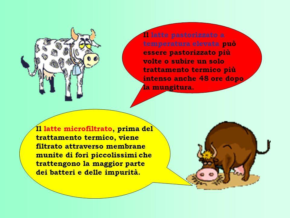 Il latte pastorizzato a temperatura elevata può essere pastorizzato più volte o subire un solo trattamento termico più intenso anche 48 ore dopo la mungitura.
