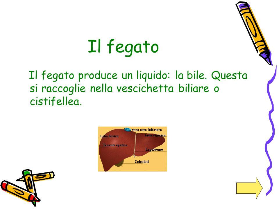 Il fegato Il fegato produce un liquido: la bile.