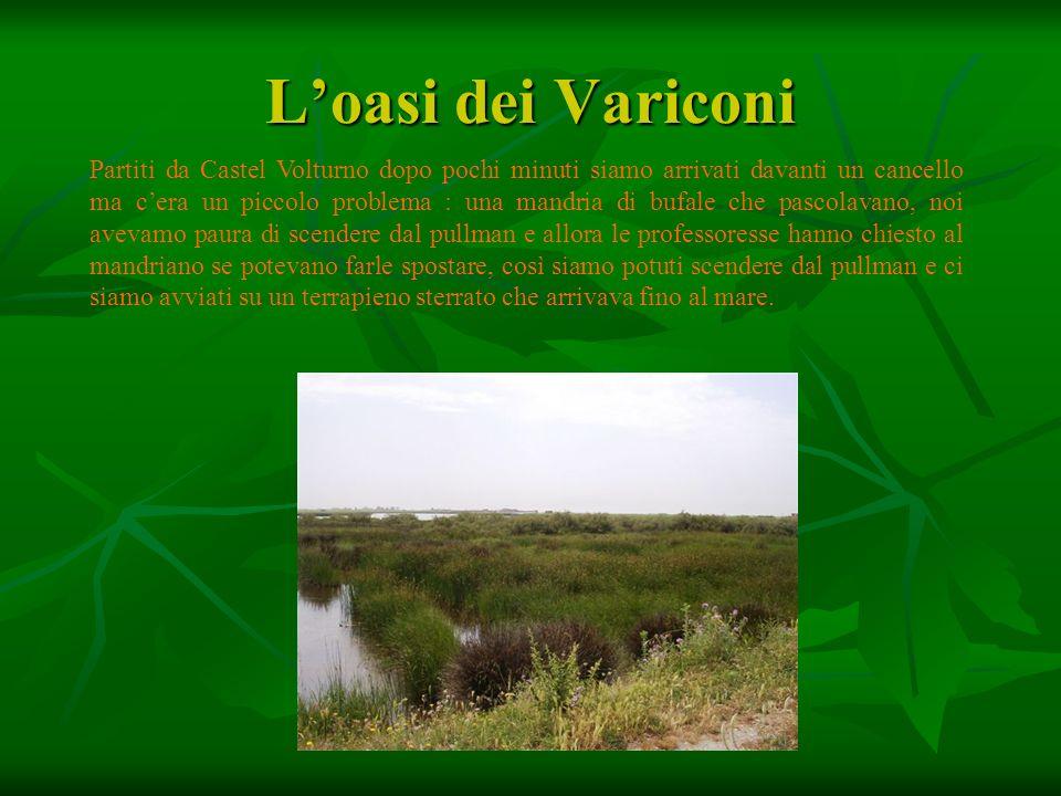 L'oasi dei Variconi